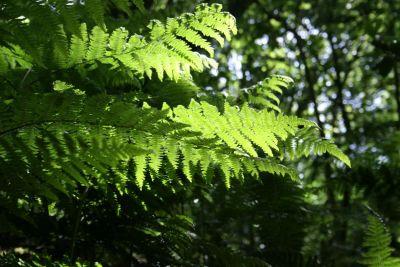 verde, detalle, sombra, hoja, naturaleza, flora, helecho, medio ambiente, verano, árbol