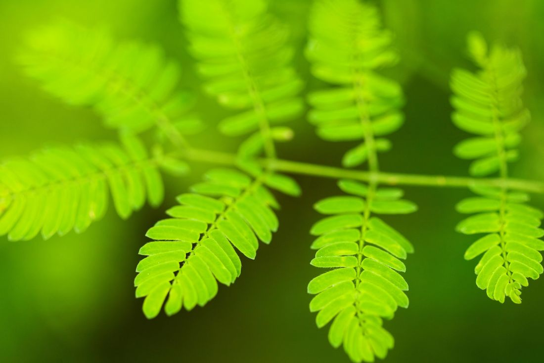 листа, флора, природа, зелен, билка, папрат, растение, листа, екология, гора