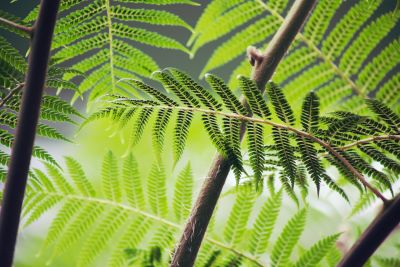 leaf, flora, nature, herb, ecology, summer, fern, exotic, plant