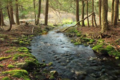 wood, water, nature, forest, landscape, leaf, stream, river