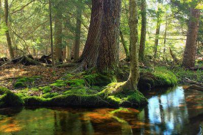 wood, landscape, leaf, forest, tree, nature, environment