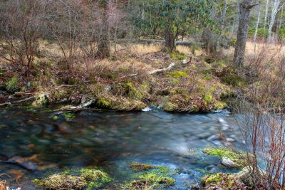 vode, krajolik, priroda, rijeke, šuma, ekologija, drvo, tok, drvo