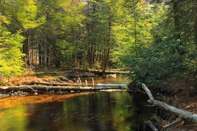 water, wood, leaf, river, tree, forest, ecology, nature, landscape, stream