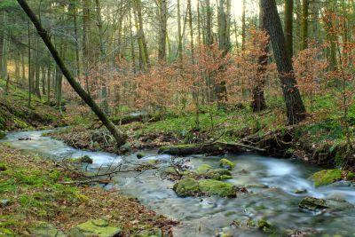wood, water, nature, landscape, stream, river, leaf