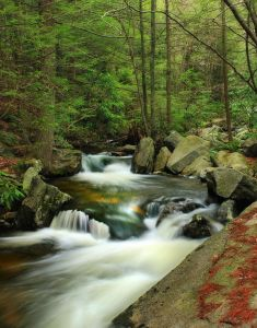 wood, water, waterfall, nature, river, creek, leaf, stream