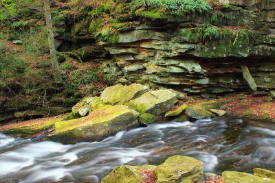 water, moss, nature, landscape, leaf, river, wood, stream