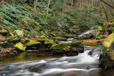 vesi, joki, stream, ekologia, vesiputous, luonto, maisema, puu