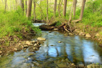 water, nature, wood, river, leaf, stream, landscape