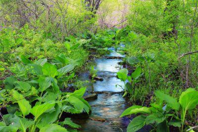prírody, list, drevo, krajiny, lesných, zelená, flora, prostredie, leto