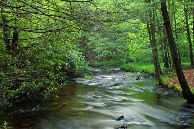 legno, natura, acqua, paesaggio, foglia, albero, fiume, foresta