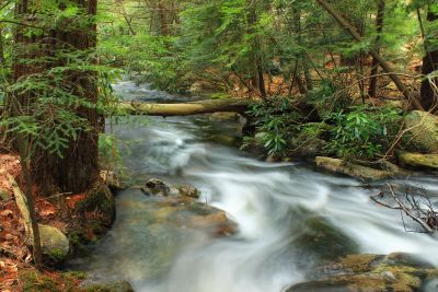 water, forest, ecology, stream, river, waterfall, wood, creek, nature