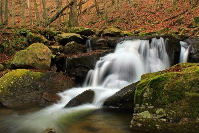 eau, cascade, automne, forêt, ruisseau, rivière, nature, mousse, bois
