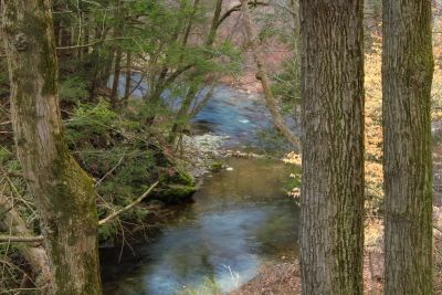 wood, forest, moss, ecology, tree, landscape, nature, water, river