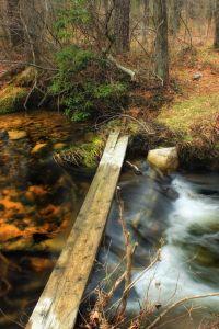 fa, víz, ősz, ökológia, folyó, patak, természet, vízesés, fa