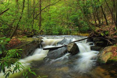 eau, cascade, ruisseau, rivière, bois, ruisseau, feuille, nature