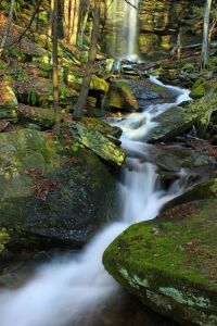 acqua, cascata, foresta, torrente, fiume, muschio, creek, legno, foglia