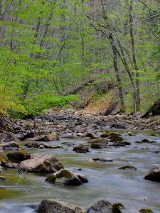 acqua, fiume, natura, foresta, montagna, flusso, paesaggio, legno, foresta