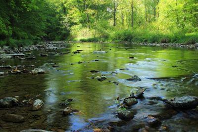 víz, folyó, természet, erdő, zöld, ökológia, patak, táj, fa, mocsár