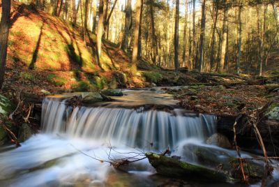 ecology, moss, water, waterfall, river, wood, stream, nature, creek