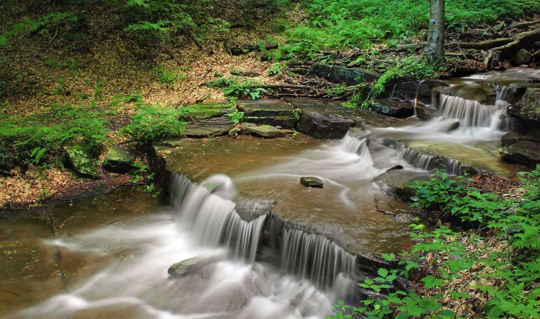 víz ökológia, patak, vízesés, folyón, természet, fa, patak