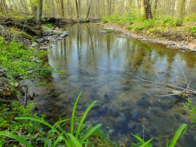 water, ecology, forest, river, nature, stream, wood, leaf, landscape