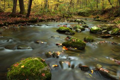 water, river, forest, ecology, stream, wood, leaf, tree, aquatic, forest