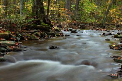 eau, rivière, feuille, ruisseau, bois, nature, ruisseau, paysage