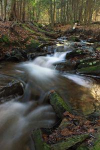 水, 森林, 青苔, 生态学, 河, 瀑布, 自然, 小河, 木头, 小河