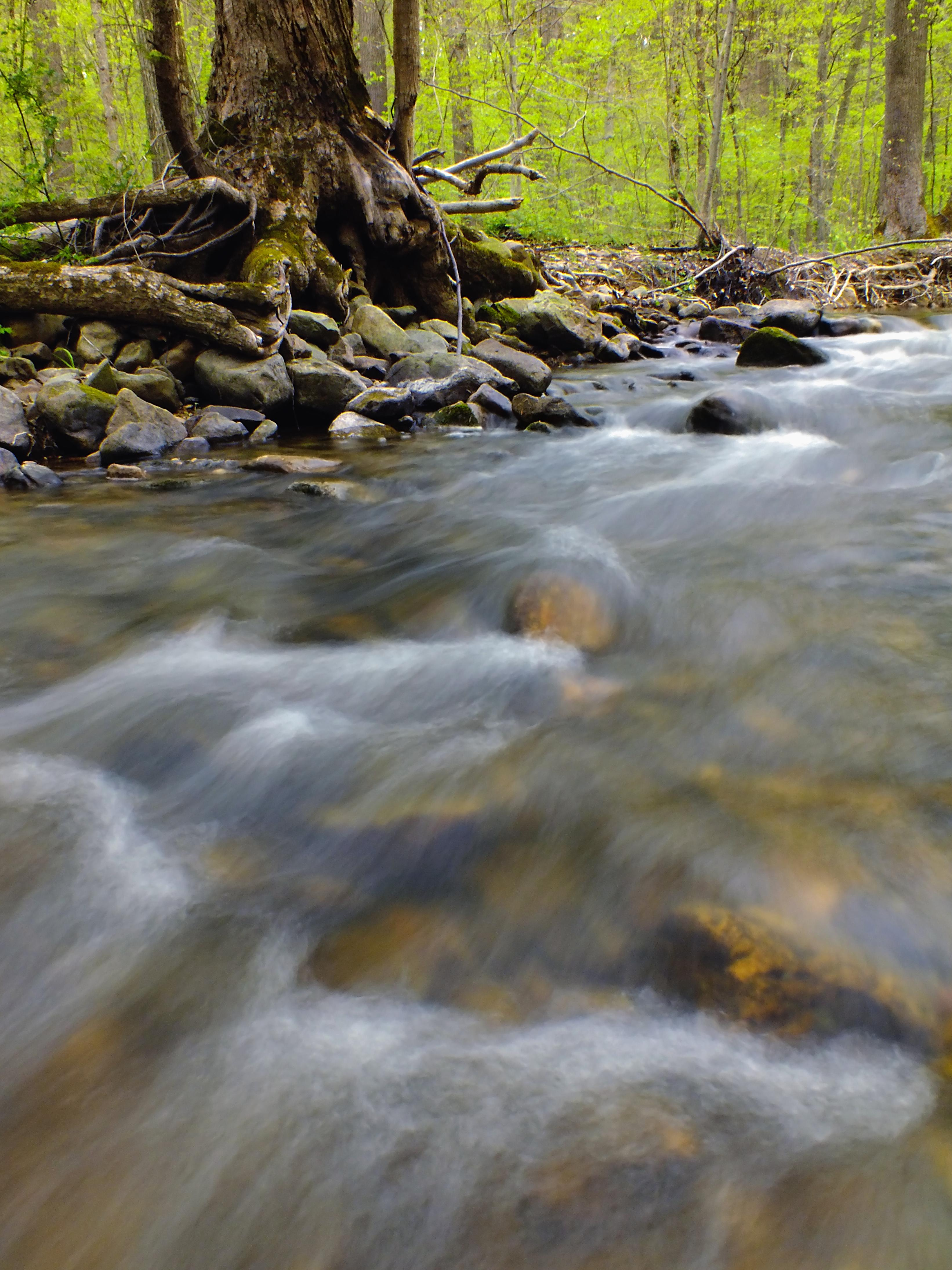Free Picture Water River Tree Forest Stream
