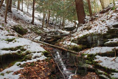 wood, nature, snow, winter, conifer, tree, landscape, water, river, environment
