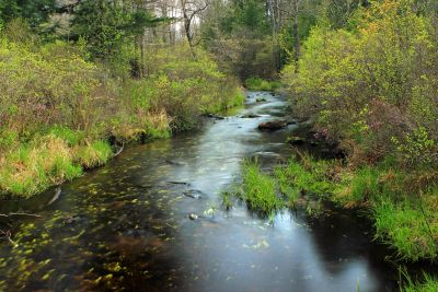 water, wood, forest, foliage, nature, river, landscape, stream, tree