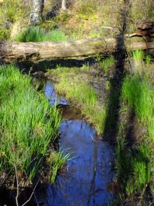 water, nature, river, wood, wilderness, ecology, landscape, grass, stream