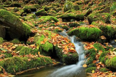 autumn, water, lichen, nature, moss, leaf, tree, wood, river, forest