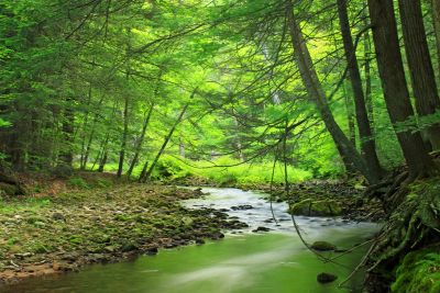 forest, green leaves, moss, ecology, wood, landscape, tree, nature, leaf, water