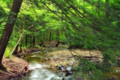 wood, nature, water, leaf, landscape, ecology, tree, river, moss