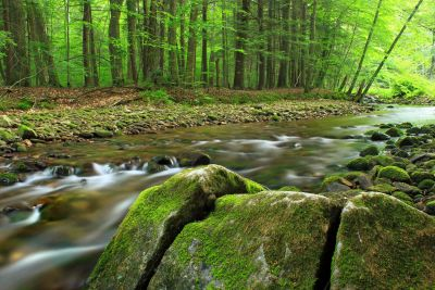 wood, water, nature, moss, landscape, ecology, river, leaf, stream