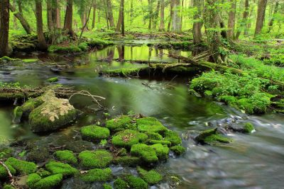 water, nature, moss, wood, forest, moss, stream, river, landscape