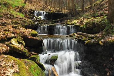 waterfall, water, stream, forest, moss, ecology, river, wood, nature, creek
