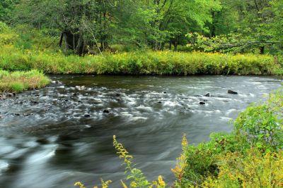 water, nature, river, ecology, stream, leaf, landscape, wood