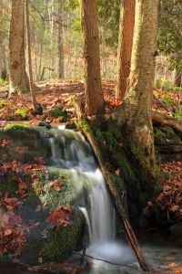 wood, water, waterfall, forest, stream, river, leaf, tree, nature