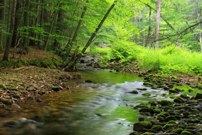 wood, nature, water, forest, landscape, leaf, river, tree, moss
