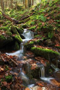 waterfall, water, forest, moss, stream, wood, nature, creek, river
