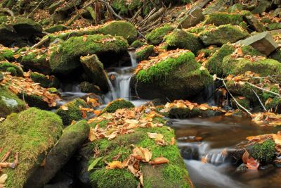 ecology, autumn, river, stream, moss, leaf, tree, naturewater