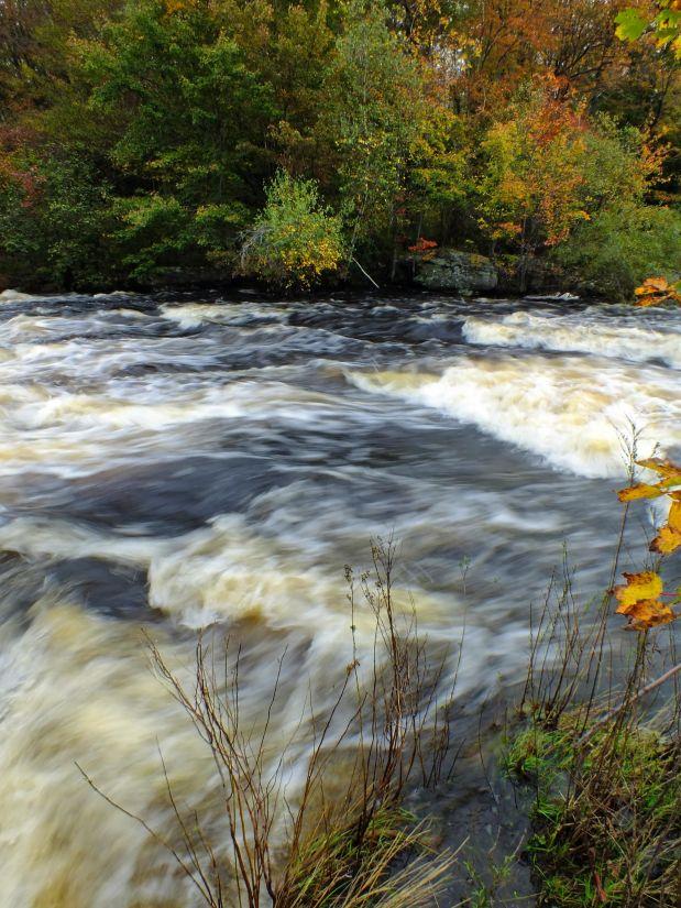 image libre eau rivi re printemps for t ruisseau paysage nature cascade bois. Black Bedroom Furniture Sets. Home Design Ideas