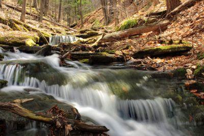 eau, cascade, forêt, automne, ruisseau, rivière, nature, ruisseau, bois