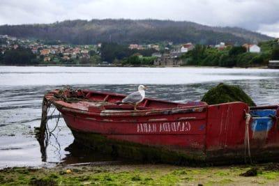 Wasser, Boot, Wasserfahrzeuge, Möwe, Meer, Vogel, Fahrzeug, Holz, Meer