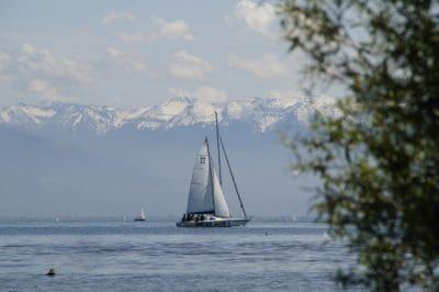 tree, water, sailboat, watercraft, sail, ocean, sea, yacht