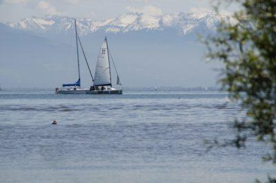water, watercraft, sea, ocean, sailboat, tree, wave, ship, boat