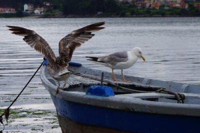 bird, seagull, water, wildlife, nature, animal, boat, landscape