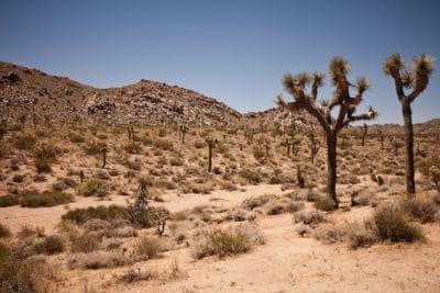 desert, dry, landscape, geology, sandstone, erosion, cactus, tree, sky, bush, shrub